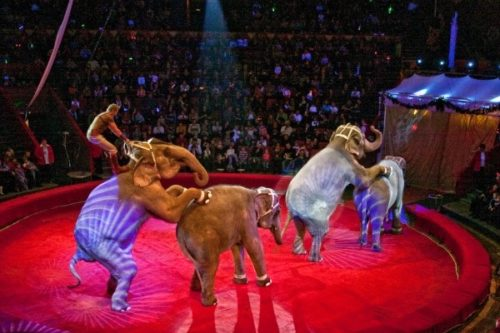 цирк на фонтанке