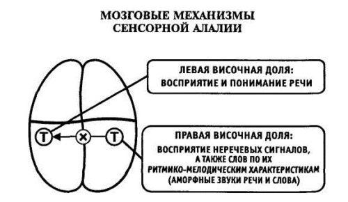 alaliya-u-detej-simptomy.jpg