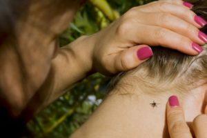 прививка от клещевого энцефалита: отзывы