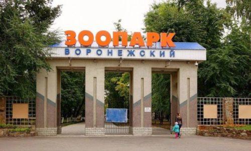 Воронежский зоопарк.jpg