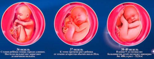 37-40 недели внутриутробного развития плода.jpg