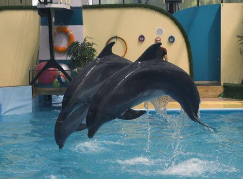 Ростовский дельфинарий.jpg