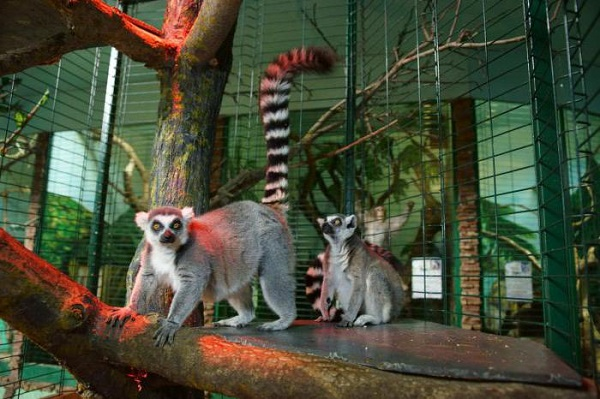 Евпаторийский зоопарк с Тропикпарком