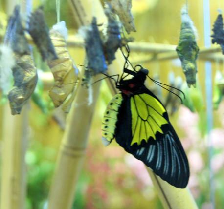 Мини-зоопарк «Сад бабочек»