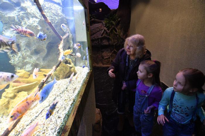 Дом-аквариум