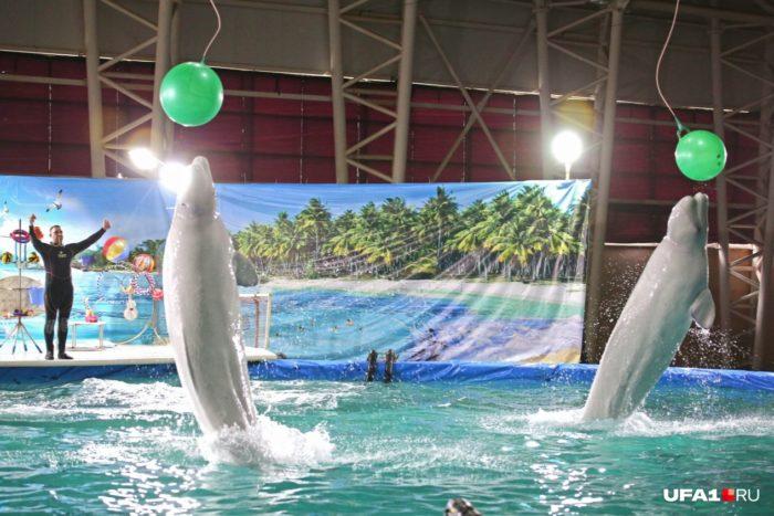 Уфимский дельфинарий в парке «Кашкадан»