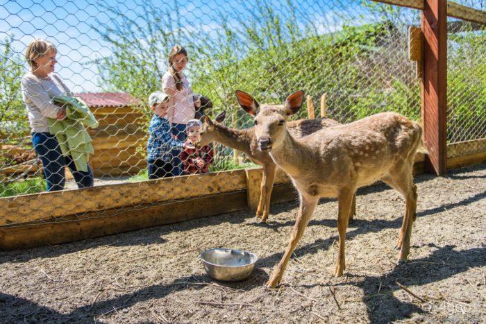 Иркутский детский зоопарк (Зоосад в Ботаническом саду ИГУ)