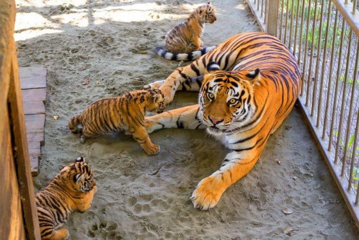 Барнаульский зоопарк «Лесная сказка»