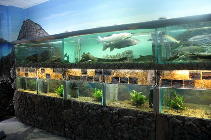 Музей-аквариум «Рыбы Амура» («Амурариум»)