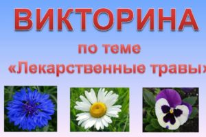 викторина лекарственные растения с ответами