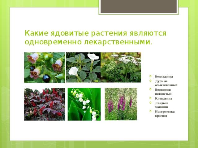 Вопросы к викторине лекарственные растения 2