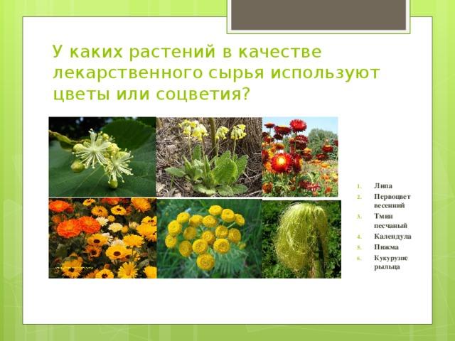 Вопросы к викторине лекарственные растения 3