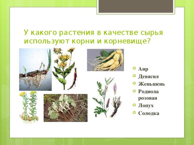 Вопросы к викторине лекарственные растения 4