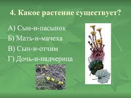 Вопросы к викторине лекарственные растения 5