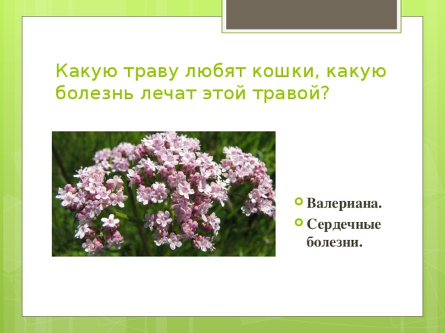 Вопросы к викторине лекарственные растения