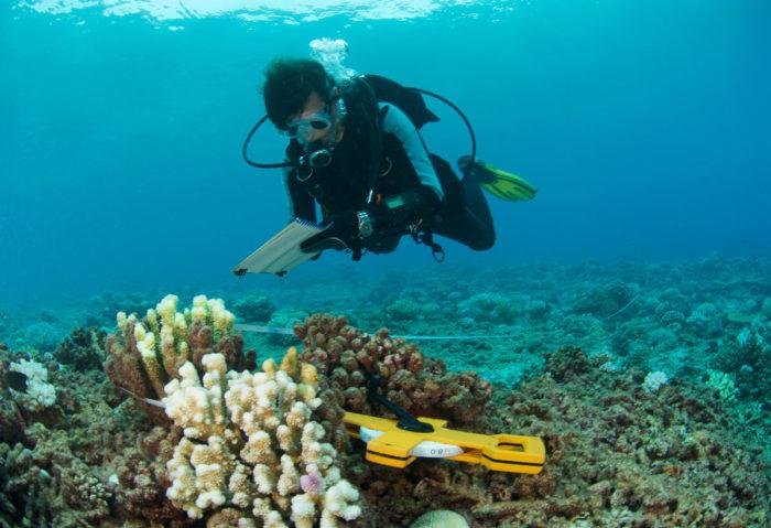 Океанолог