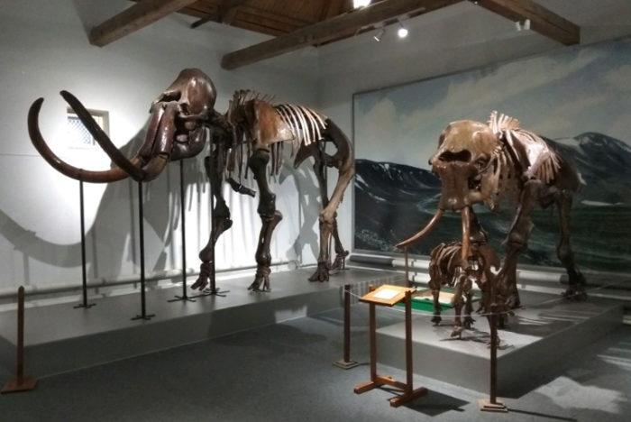 Музей природы и охраны окружающей среды